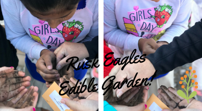 Fourth graders gardening different kinds of vegetable in our edible garden.